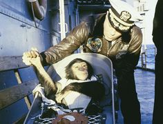 """UPDATE: April Fools!  A stunning example of how international cooperation in space can sometimes  backfire, the head of Roscosmos has announced that the agency will send a  chimpanzee named """"Yurya""""on board its next Soyuz capsule, slated for launch  on September 4, 2016.  Yurya will replace a Russian cosmonaut who had been originally selected to  join Expedition 48 to the International Space Station (ISS), and will  officially begin Russia's new """"Chimponaut"""" program...."""