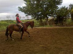 """Pony Deporte """"D"""" en venta en Aragón :: Venta de Caballos. HE32470B2"""
