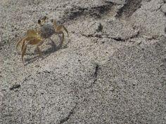 crab on sand