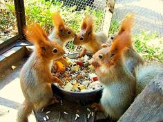 These squirrels always look really surprised