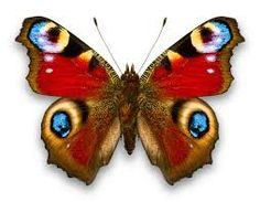 butterfly - Google-Suche