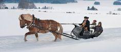 Lapissa vedetään rekeä hurjalla vauhdilla. Menit koiravaljakolla tai hevosen vetämällä reellä, on vauhti päällä. Lapissa rekiajelu on suosittua.  Kirjoittanut Aada