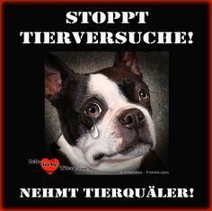 Stoppt Tierversuche! Nehmt Tierquäler! >> http://www.ich-liebe-tiere.com/ <<