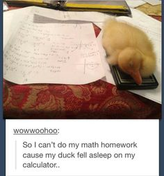 @Dєχтяу ☯ this is a pic i would take and prob send to you lol i should get a duck and name it Zerrie Elounor Stypayhorlikson lolol :D