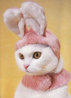 #Cats with #hats ! @Meredith Dlatt Ryan - I'm thinking about this one for Paisley. :)  Repinned from Sarah Barnes