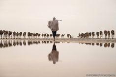 A foto do português Joel Santos, de um funcionário de uma mina de sal levando uma caravana de camelos na região de Afar, na Etiópia, recebeu uma recomendação especial na Categoria Água