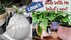 What's New at Lowes? 🌵🌱 Lowes Shop With Me Balcony Garden, Whats New, Container Gardening, Lowes, House Plants, Sassy, Succulents, Shopping, Indoor House Plants