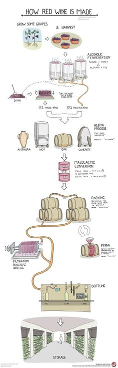 what wine glasses to use for what type of wines - Google Search