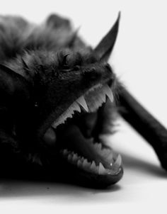 Bats are flying mammals in the order Chiroptera. The forelimbs of bats are webbed and developed as wings, making them the only mammals naturally capable of true Ugly Animals, Cute Animals, Scary Animals, Murcielago Animal, Beautiful Creatures, Animals Beautiful, Creatures Of The Night, Tier Fotos, Mundo Animal