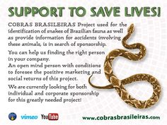 COBRAS BRASILEIRAS Project used for the identification of snakes of Brazilian fauna as well as provide information for accidents involving these animals, is in search of sponsorship. You can help us finding the right person in your company.An open mind person with conditions to foresee the positive marketing and social returns of this project. We are currently looking for both individual and corporate sponsorship for this greatly needed project!