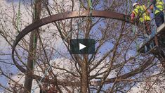 "This is ""HISTORY TREES"" by Daniel Saul on Vimeo, the home for high quality videos and the people who love them."