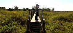 Mario fotografando na passarela  Pouso Alegre Lodge, Pantanal, Mato Grosso