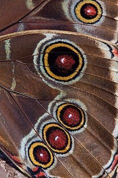 Beautiful Butterfly Wings | Butterfly Wings