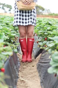Strawberry Picking in Gingham and Hunters -- Young Cosmopolite Strawberry Picking, Strawberry Patch, Strawberry Farm, Strawberry Fields, Red Jewel, Love Her Style, The Girl Who, Hunter Boots, Children Photography