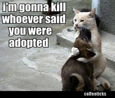 I'm gonna kill whoever said you were adopted!