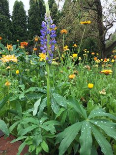 The Contagious Permaculture Bug Autumn Garden, 3 Things, Permaculture, Lazy, Bloom, Winter, Flowers, Plants, Winter Time