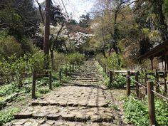 ボストンテリアのカールさんの暮らし: 犬とトレッキング「栃木県・太平山の美味しい名物と太平山神社から眺める景色が最高でした!」