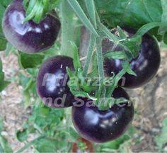 blaue Tomate * 10 Samen BLAU ! EXOTISCH SEHR SELTEN Tomaten fuer Balkon Kuebel  de.picclick.com