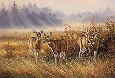Rosemary Millette Meadow Mist - Whitetail Deer Canvas