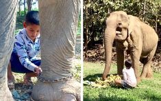Beautiful Photo of Little Boy Removing Chains From Rescued Elderly Elephant Will Warm Your Heart Animal Rescue Stories, After Story, Elephant Sanctuary, Animal Shelter, Champs, Elephants, Little Boys, Funny Animals, Thailand
