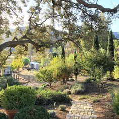 Going to visit the donkeys... always a great way to start the morning. I hope you have a wonderful day! #patinafarm #ojai