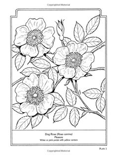 The Language of Flowers Coloring Book Dover Pictorial Archives: Amazon.de: John Green: Fremdsprachige Bücher