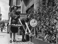 19th June 1942: Waitresses from the 'Quality Inn' restaurant in Regent Street, London, watering and gathering tomatoes that are growing in boxes on the pavement as part of the 'Dig For Victory' scheme. (Photo by Paget/Fox Photos/Getty Images)