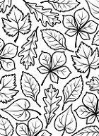 Darice Embossing Folder (Size A2) - Foliage
