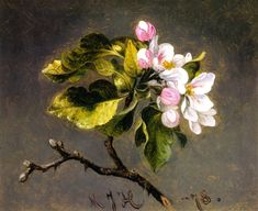 Apple Blossoms - Martin Johnson Heade American painter 1819-1904