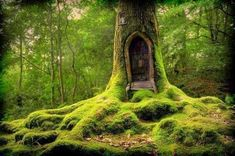 #Forest #Forests #BeautifulMysteriousForests