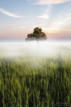 """500px / Photo """"BARLEY MIST"""" low sea fog stretches its blanket over ripening barley field on the Llyn Peninsular in North Wales."""