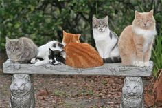 There are 7 cats in this photo...can you spot them all?