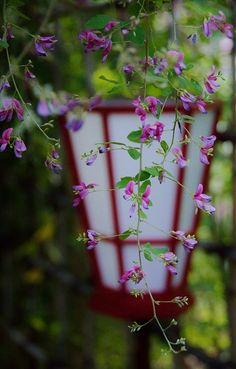 Mukōjima-Hyakkaen Garden, Tokyo, Japan