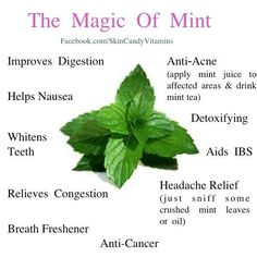 Mint. Add it to most of my drinks :)