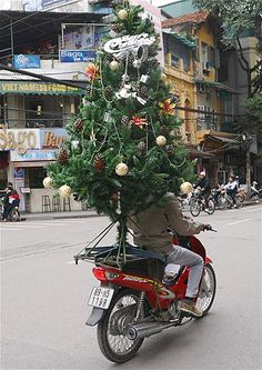 A delivery man transports a Christmas tree on his motorbike in Hanoi, Vietnam