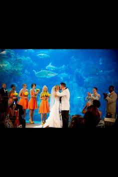 Our wedding at the Florida aquarium