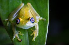 New Reserve Protects Madagascar's Weirdest Creatures : Discovery News