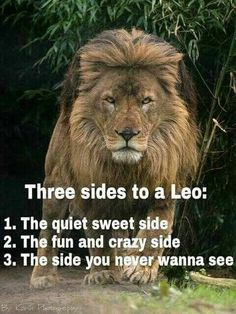Leo the lion Leo Horoscope, Astrology Leo, Leo Zodiac Facts, Zodiac Quotes, Pisces Zodiac, All About Leo, Lion Quotes, Quotes Quotes, Tiger Quotes