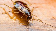 Eine Kakerlake auf dem Boden (Quelle: Thinkstock by Getty-Images/Wi6995)