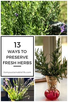 Looking for ways to preserve herbs during the height of their growing season? A way to capture the intense flavor that only fresh herbs straight from the garden can boast? Herb Garden Design, Herbs Garden, Garden Fun, Edible Garden, Garden Crafts, Garden Ideas, Organic Gardening, Gardening Tips, Calendula Tea