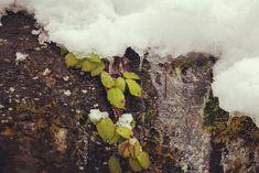 Onder de sneeuw gaat 'het leven' gewoon door... #willemlaros.nl #fotograaf #reisfotografie #reisblog #reizen #reisjournalist #fotoworkshop #landschapsfotografie #redacteur #flickr #fbp #500px #winterkamperen #oostenrijk #tirol  # lovetirol #kitzbüheleralpen #wintercamping