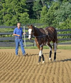 Before your young horse begins full-scale training, he can benefit greatly from  physical conditioning.
