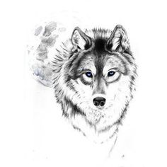 wolf tattoo Tumblr love this wolf and moon. best stuff