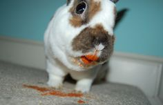 Coral lipstick is the new trend, even amongst bunnies xD