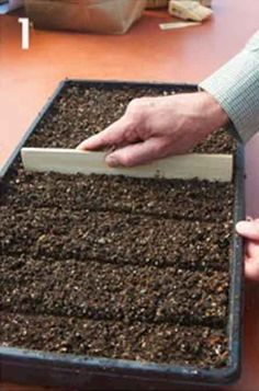 How To Grow Plants From Seed At Home