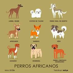 Tipos de Perros.