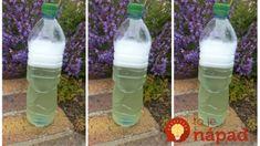 Water Bottle, Organization, Drinks, Garden, Getting Organized, Drinking, Organisation, Beverages, Garten