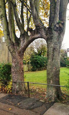 Old Tree Garden Nature 54 Ideas Weird Trees, Old Trees, Tree Branches, Unique Trees, Nature Tree, Tree Forest, Plantation, Tree Art, Amazing Nature