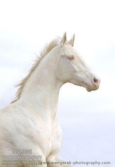 Equine Photography - Karolina Wengerek Album 'Horses'