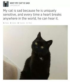 Why my cat is sad.